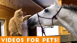 Video Funniest Videos for Pets to Watch Compilation | Funny Pet Videos MP3, 3GP, MP4, WEBM, AVI, FLV Juli 2019