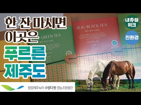푸른 제주에서 온 마음까지 따뜻해지는 녹차와 홍차 (feat.수망다원) l 내추럴위크 2019