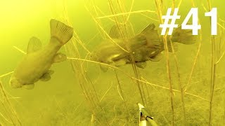 """Физкульт привет всем """"пастухам"""" маточного стада и поголовья из комментов))Охота была в новом аквариуме, где подвохов ещё видимо не было до этого)) Подводная охота, Spearfishing, Zemūdens Medības, Varustuse"""