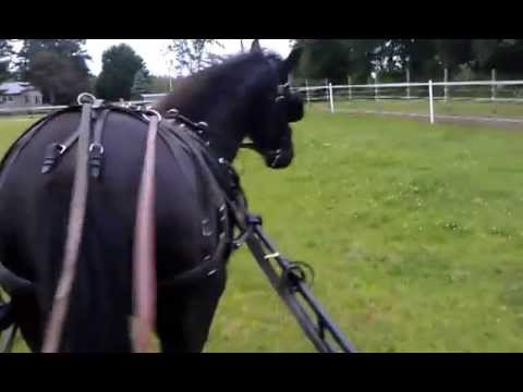 how to drive a horse