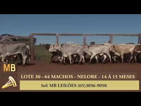 195º LEILÃO VIRTUAL MB LEILÕES