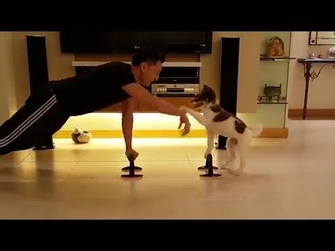 video sbalorditivo: cane fa le flessioni!