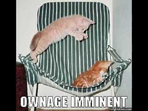 funny cats lol