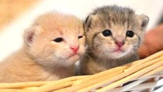Cute Kittens Compilation 2015 [NEW]