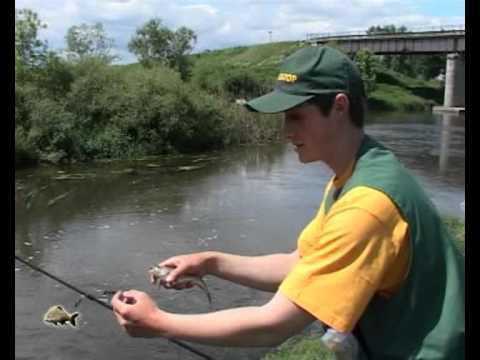 на что и как ловить сома летом в малых реках