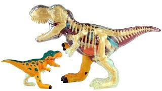 "https://youtu.be/OtcP5fjHbDw X-ray Fun Tyrannosaurus Rex - 3D Puzzle T-Rex Dinosaur Model - 3D Dinosaurs Speed buildProduct Description - Fun and educational Tyrannosaurus rex Dinosaur anatomy model Half- clear body showcases organs and skeletal structure 35 brightly colored pieces 9 "" long, 5 1/4"" tall.Other great Dinosaur toy videos at:https://youtu.be/NuSM159ZJwU Tyrannosaurus Rex Electric Motor 3D Puzzle - Dinosaur model of T-Rex - 3D Dinosaurs Speed buildhttps://youtu.be/jrlJu2mx3AM Crystal Amber Tyrannosaurus Rex 3D Jigsaw puzzle - T-Rex Dino Toy Puzzle - Dinosaur speed Buildhttps://youtu.be/Pndij6CXpNU Stegosaurus 3D Puzzle Age of Dinos - Dinosaur model of Stegosaurus - 3D Dinosaurs Speed buildhttps://youtu.be/vHpQX4WpkVc Plesiosaurus DINO 3D Puzzle - Dinosaur model of Plesiosaurus - 3D Dinosaurs Speed buildhttps://youtu.be/SovmSWwsnBg Triceratops Dinosaur 3D Puzzle - Dinosaur model of Triceratops - 3D Dinosaurs Speed buildhttps://youtu.be/xZ9-tSk3nCc Tyrannosaurus Rex 3D Puzzle - Dinosaur model of T-Rex - 3D Dinosaurs Speed buildhttps://youtu.be/LXAxhx_KFik Triceratops DINO 3D Puzzle  - Dinosaur model in forest scene - Build a Triceratops for kidshttps://youtu.be/GjaQk0vlb2w Tyrannosaurus DINO 3D Puzzle  - Dinosaur model of T-Rex 3D  - Build a Tyrannosaurus for kidsBrachiosaurus Songhttps://youtu.be/0JoWySRTygQ Brachiosaurus Song - Dinosaur song for children - Tallest Dinosaur - Playmobil dinos Stegosaurus Songhttps://youtu.be/cWNJaJ5M1ho Stegosaurus Song - Dinosaur song for kids - 5 Stegosaurus eggs hatching - Playmobil Dinoshttps://youtu.be/we1SDp1pJKs Playmobil Tyrannosaurus Dinosaur - Playmobil 5230 Dinos Volcano with T-Rex Dinosaur - Dinosaurierhttp://youtu.be/NDwqRiVU99Y Playmobil Dinos Stegosaurus Dinosaur (5232) Toy unboxing Jurassic Dinosaur http://youtu.be/TnvAHQ8dxs0 Playmobil Dinos - Dimetrodon Dinosaur (5235) unboxing - Dinosaur in habitat toy https://youtu.be/4aJM_00ztsU Playmobil Dinos Brachiosaurus 5231 - Dinosaur toys Brachiosaurus with baby and treehttps://youtu.be/bMi75owuEao Playmobil Dinos Triceratops With Baby and Explorer 5234 - Dinosaur toysX-ray Fun Tyrannosaurus Rex - 3D pussel T-Rex dinosauren modell - 3D Dinosaurs hastighet byggaX-ray moro Tyrannosaurus Rex - 3D Puzzle T-Rex Dinosaur modell - 3D dinosaurer hastighet byggeX-ray Fun Tyrannosaurus Rex - 3D puzzel T-Rex dinosaurus Model - 3D dinosaurussen snelheid gebouwdX-ray 재미있는 절대강자였던 티라노사우러스 렉스 3D 퍼즐 T-Rex 공룡 모델 - 3D 공룡 속도 구축X 線の楽しみのティラノサウルスレックス - 3 D パズル T - Rex 恐竜モデル - 3 D 恐竜スピード構築X-ray διασκέδαση Tyrannosaurus Rex - 3D Puzzle T-Rex Δεινόσαυρος μοντέλο - 3D Δεινοσαύρων ταχύτητα κατασκευήςX-ray Sjov Tyrannosaurus Rex - 3D puslespil T-Rex Dinosaur Model - 3D Dinosaurer hastighed byggeX 射线的有趣的各种恐龙 Rex -3维拼图 T - Rex 恐龙模型 -3D 恐龙的速度构建X-ray divertido Tiranosaurio Rex - Puzzle 3D dinosaurio T-Rex Modelo - 3D Dinosaurios construir velocidadrsão de raios X Tyrannosaurus Rex - 3D Puzzle T-Rex Modelo dinossauro dinossauros - 3D Velocidade construirX-ray Spaß Tyrannosaurus Rex - 3 D Puzzle T-Rex Dinosaurier Modell - 3D Dinosaurier Geschwindigkeit bauenA RAGGI X divertimento Tyrannosaurus Rex - 3D Puzzle T-Rex Modello di dinosauro - 3D i dinosauri build di velocitàX-ray Fun Tyrannosaurus Rex - 3D Puzzle dinosaure T-Rex dinosaures 3D - Modèle pour développerCheck out our Channel at PressPlayPictureHousehttps://www.youtube.com/channel/UCHBoTCYv3TxBdBJNDXTM-WQSubscribe http://www.youtube.com/subscription_center?add_user=PressPlayPictureHouse"