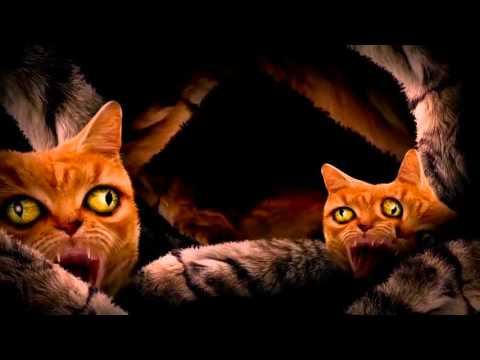 Run The Jewels Ft. Lil Bub, Maceo & Delonte  - Meowpurrdy