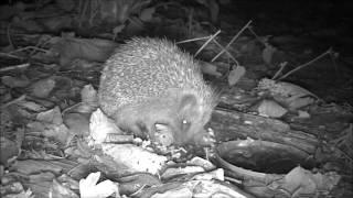 Wildlife Trail Camera - 30.11.2016
