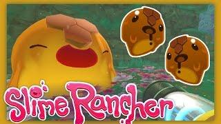 Slime Rancher : OH HONEY HONEY  ~ Sqaishey