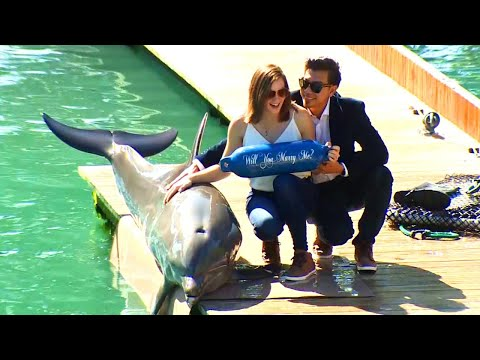Dolphin Helps Man Propose to Girlfriend at Seaquarium