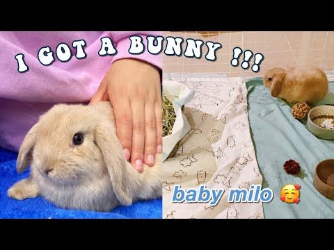 I GOT A BUNNY VLOG!!! *Come with me to get my holland lop baby*