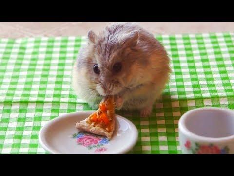 Un Hámster Comiendo Pizza