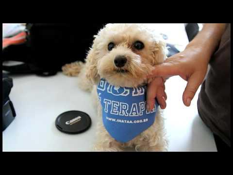Making Of - Calendário dos Cães Terapeutas 2013