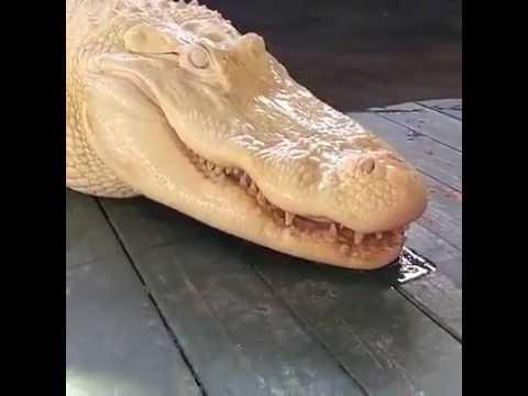 Cá sấu đẹp quá