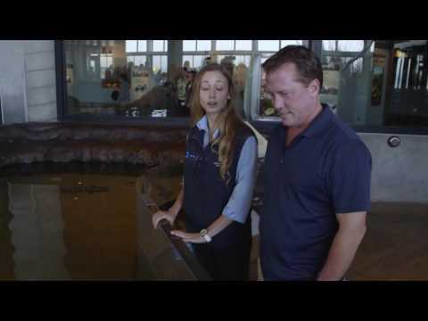 Monterey Bay Aquarium – California