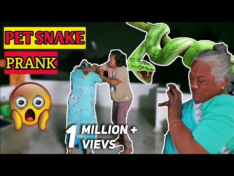 Pet Snake PRANK on Paati | TWIST at end🐍🐍🔥🔥🤣🤣