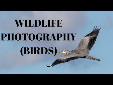 UK Wildlife Photography - an unexpected encounter... (Peregrine falcon, hobby, buzzard and more!!!)