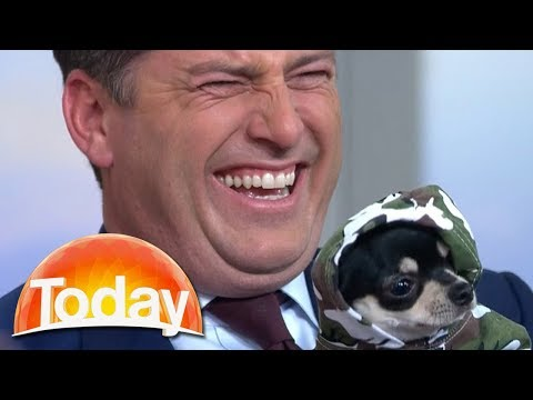 Karl thinks Chihuahua is battery powered   TODAY Show Australia