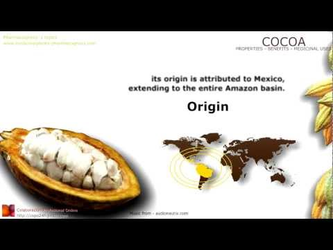 Cocoa benefits. (Cacao) Properties and medicinal uses of Cocoa tree, leaves, fruit and beans