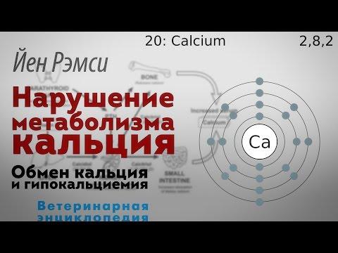 Нарушение метаболизма кальция. Обмен кальция и гипокальциемия