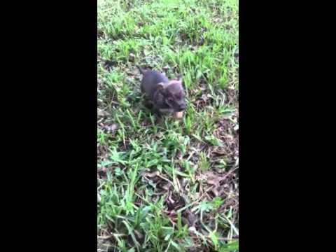 Teddy Bear playing in the yard!