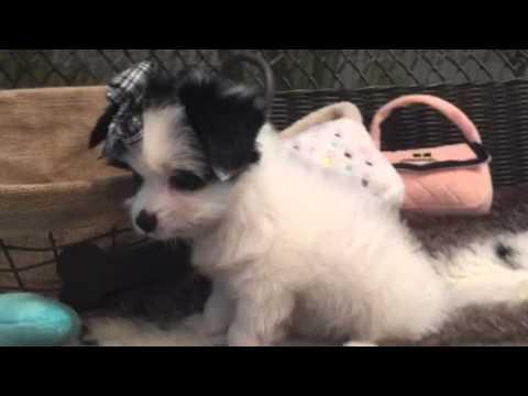 Unique little cutie, Papitese baby girl