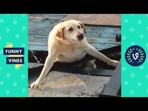 TRY NOT TO LAUGH - Cute FUNNY ANIMALS  Funny Videos January 2019