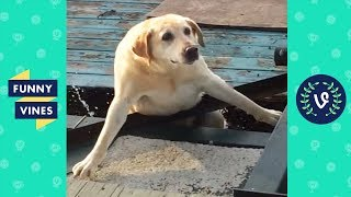 Video TRY NOT TO LAUGH - Cute FUNNY ANIMALS | Funny Videos January 2019 MP3, 3GP, MP4, WEBM, AVI, FLV Februari 2019