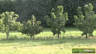#1343 Über Autos Himbeeren und Birnen - England 2013