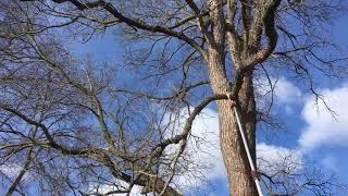 7. Ścinanie gałęzi Stihl HT 103