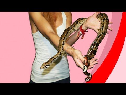 "Рассказ про тринидадского удава (Boa constrictor ""Trinidad"")"