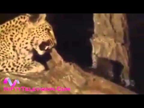 Leapard