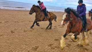 Cumbrian Heavy Horses Beach Ride By Drone & GoPro HD
