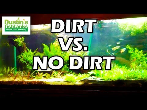 Long talk with Bryan about the 220 Planted tank, Dirt VS No dirt. 4 months old