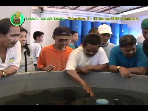 Southeast Asian Fisheries Development Center (SEAFDEC): Training on Ulang (Freshwater Prawn)