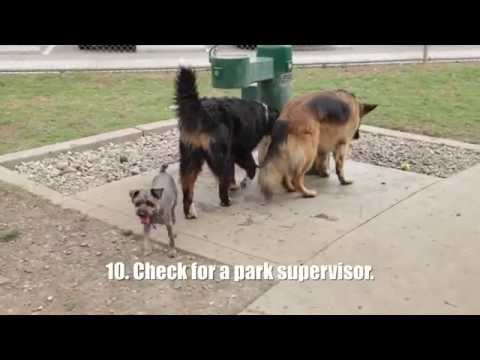 Video Watch This Video Before Going to a Dog Park download in MP3, 3GP, MP4, WEBM, AVI, FLV January 2017