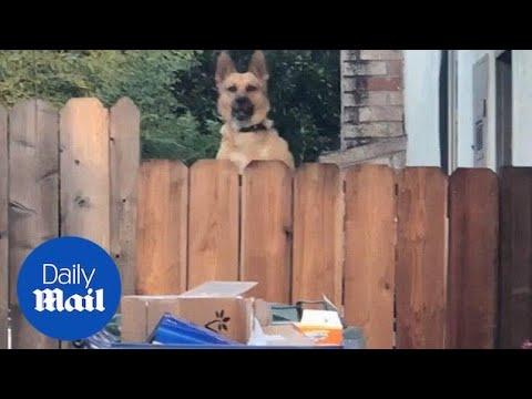 Ο σκύλος που κάνει τα πάντα για να τραβήξει την προσοχή