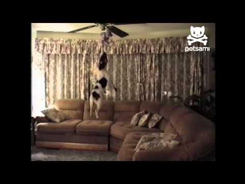 我跳~我跳~我跳跳跳~把人家的娃娃還給我!!!!!!