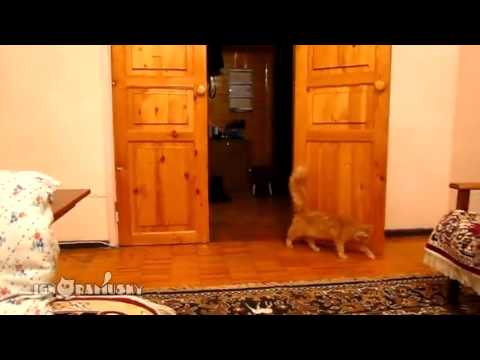 Cat startled by Mario jumping sound