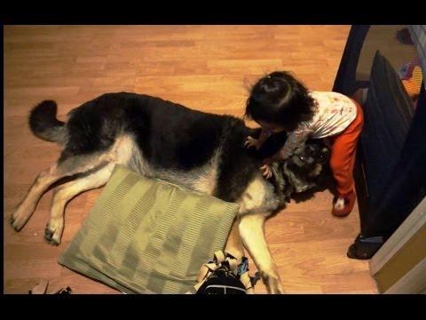 寶寶超愛他們家的德國狼犬!直接把狗狗當枕頭啦~