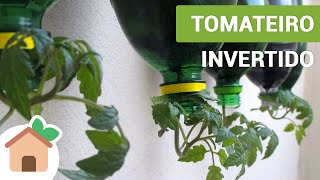 Video Tomateiro Invertido | Tomato Plants Inverted MP3, 3GP, MP4, WEBM, AVI, FLV Maret 2019