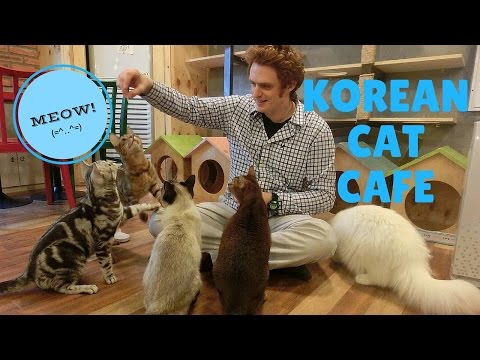Cat Cafe – Seoul, Korea