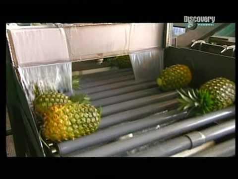Cesta ananasu na náš stůl