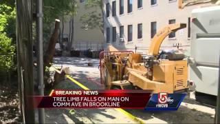 Man hit by falling tree branch in Brookline