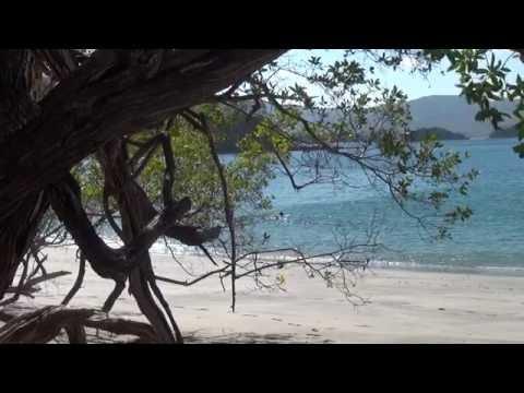 Джунгли.Путешествие в Коста-Рику (Живая природа HD) (видео)