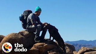Hike With The World's Most Resilient Pittie | The Dodo Airbnb Experiences by The Dodo