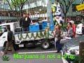 2008 Marijuana March Tokyo マリファナ マーチ東京 大麻 age restricted
