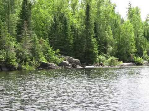 Healing Forest Meditation