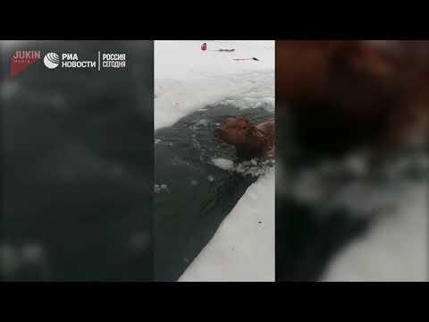 Мужчины прорубили во льду путь провалившимся  лосям