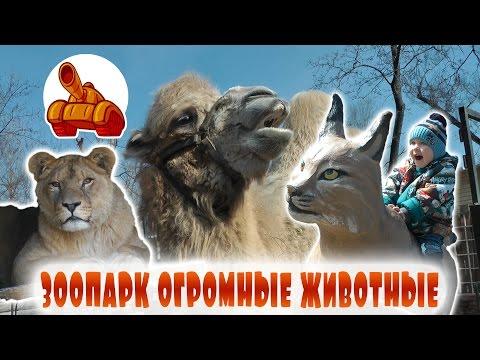 Идём в Зоопарк Животные для Детей Кормим Верблюда   Гоинг то зе Зоо Анималс Кидс Феединг зе Камел